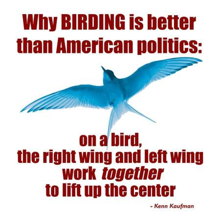 Bird Politics